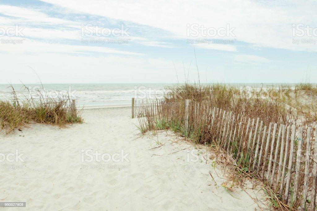 Charleston Folly Beach South Carolina Landscape Southern Usa Stock Photo Download Image Now Istock