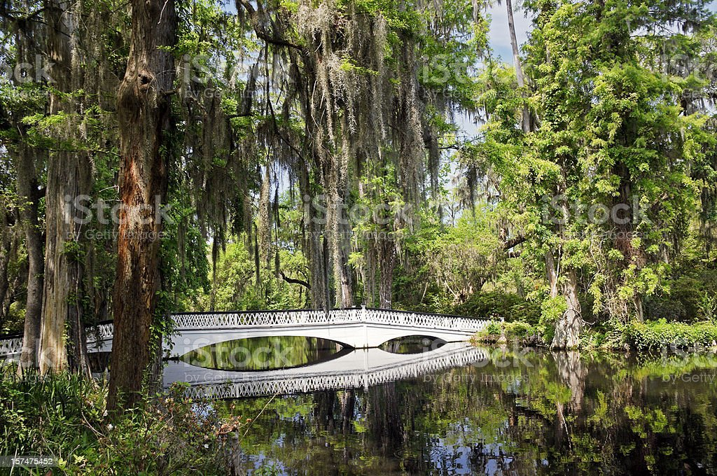 Charleston Magnolia Plantation White Bridge stock photo