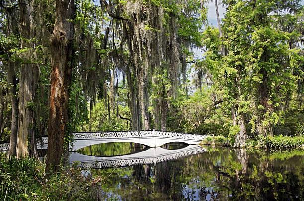чарльстон магнолия плантация белый мост - magnolia стоковые фото и изображения