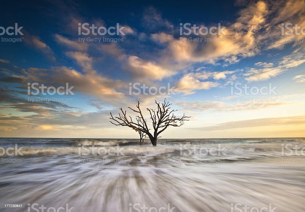 Charleston SC Coast Botany Bay Ocean Oak Tree Edisto Island stock photo