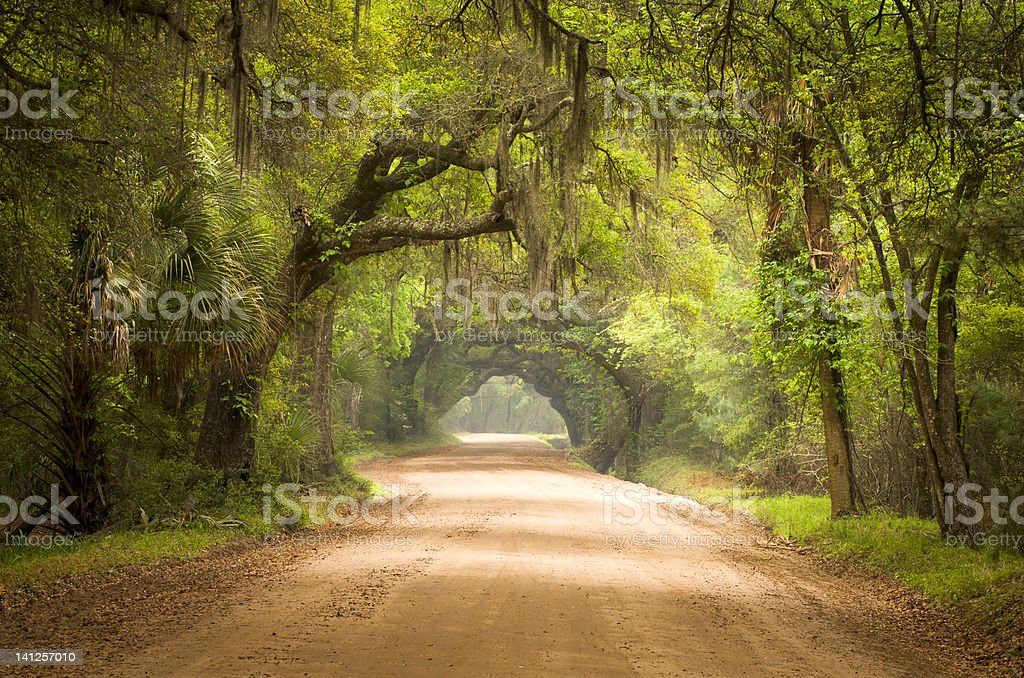 Charleston SC Dirt Road Forest Botany Bay Plantation Spanish Moss stock photo