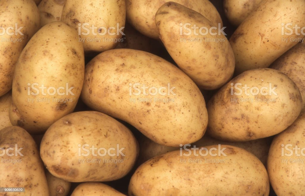 Charlotte potato stock photo