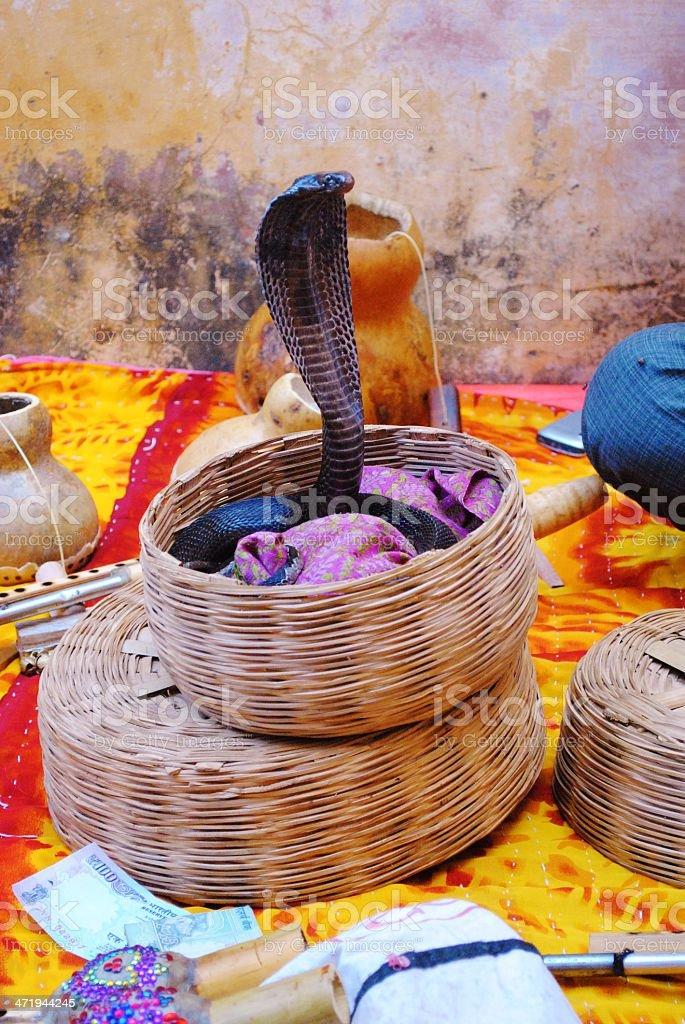 Charmed Cobra in basket, India stock photo