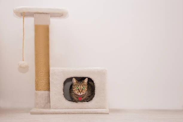 charming cat sitting in the house - jagdthema schlafzimmer stock-fotos und bilder