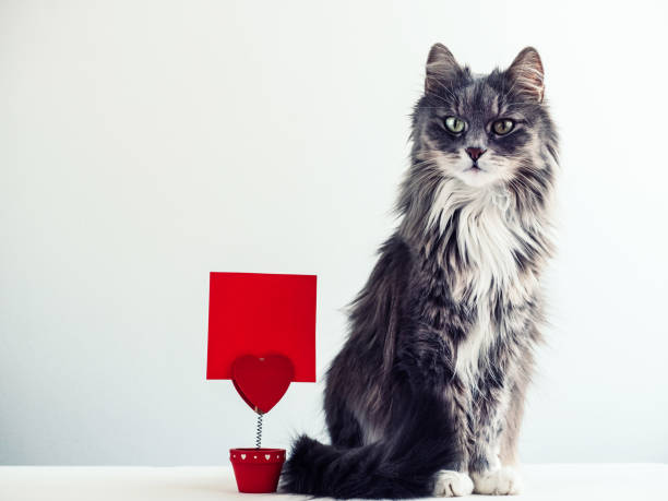 Charming, furry cat near the holder for papers in the form of a heart with a note Charming, furry cat near the holder for papers in the form of a heart with a note for important events kitten cute valentines day domestic cat stock pictures, royalty-free photos & images