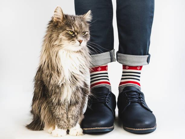 Charming kitty mens legs bright multicolored socks picture id1127079195?b=1&k=6&m=1127079195&s=612x612&w=0&h=jb8i58pbz4fqkolyp73oov8fj5iqom3iey9dwj0nu7q=