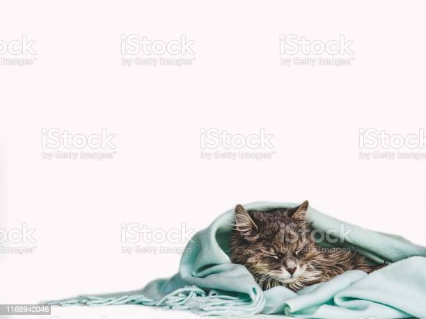 Charming kitty wrapped up in a scarf picture id1168942046?b=1&k=6&m=1168942046&s=612x612&h=lqjs jy 9rditbnvnal8z4aj4ltl8 34thqij31jdgc=