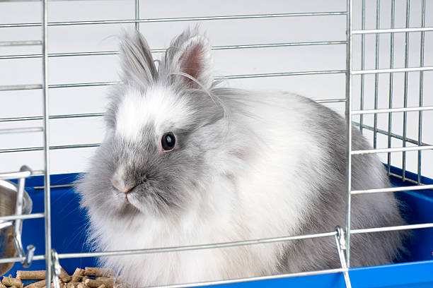 A charming white angora bunny in a cage stock photo