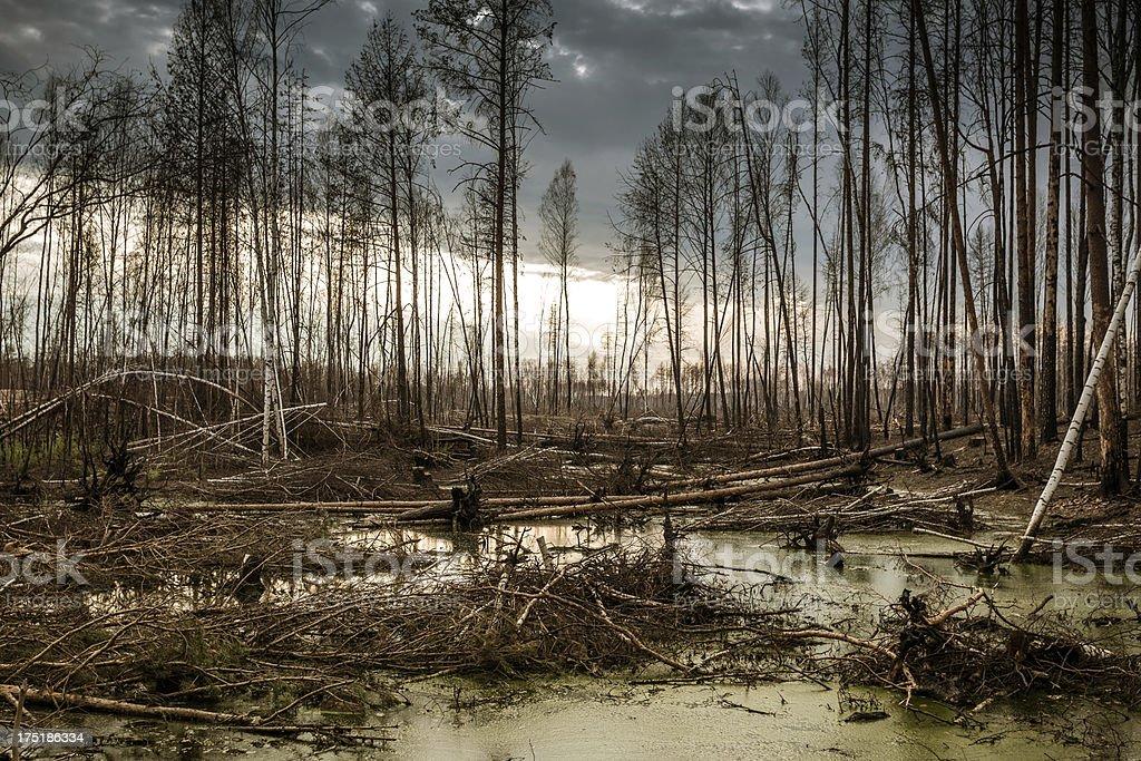 Se carbonice completamente y novedosos bosque después de fuego - foto de stock