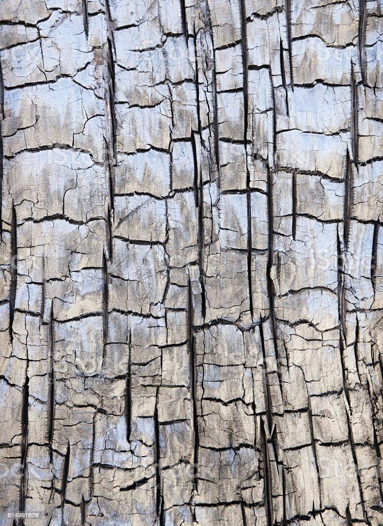 Charred Bark Burnt Dead Tree Pinion Pine stock photo
