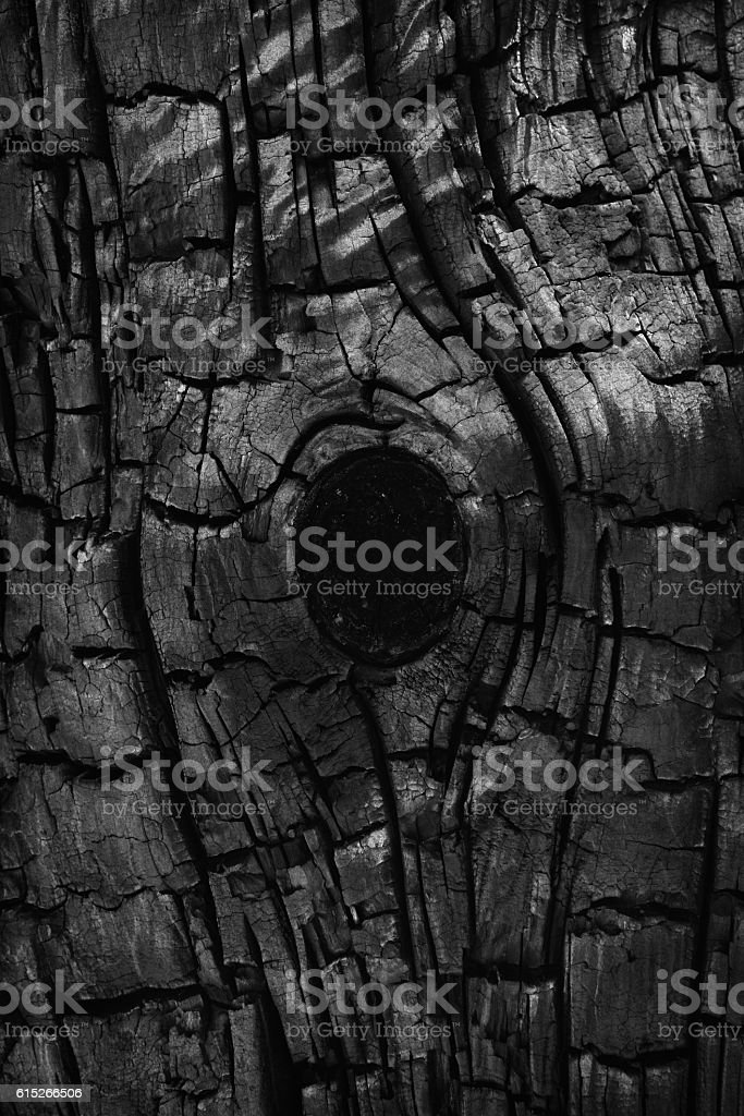 Charred Burnt Tree Bark Knot Pinion Pine stock photo