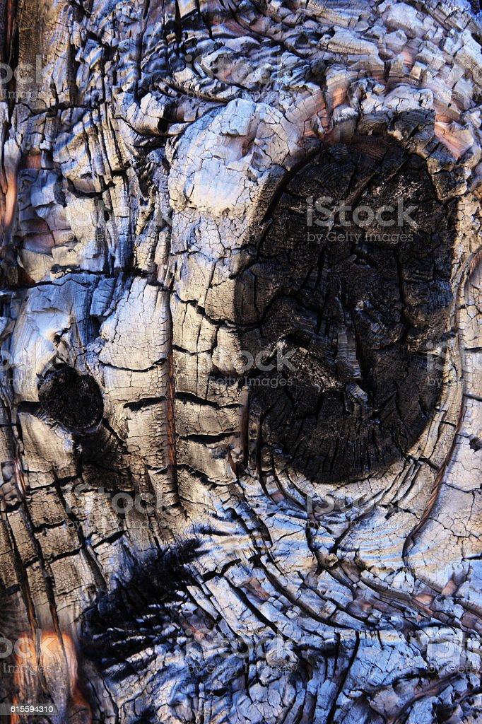 Charred Burnt Tree Bark Phloem Knots stock photo