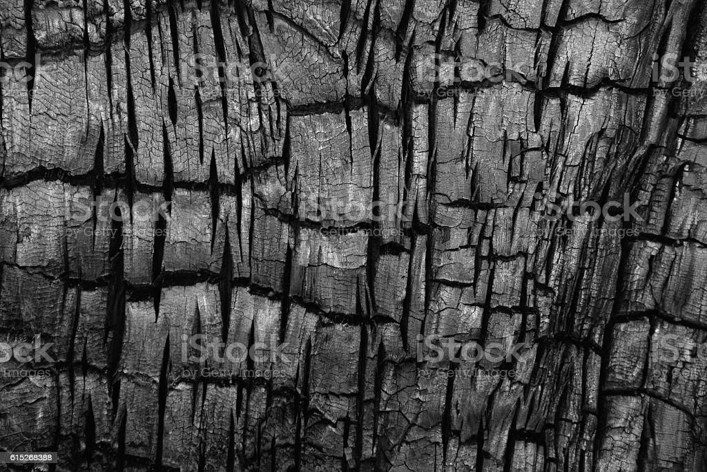 Charred Burnt Tree Bark Phloem stock photo