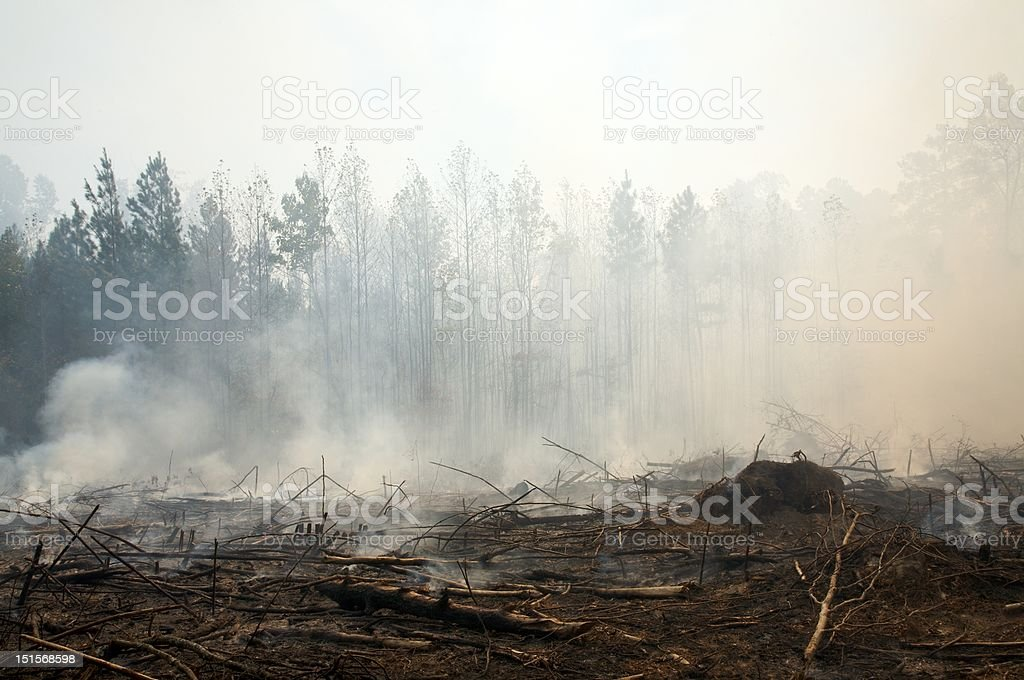 Charred landscape and smoke from a prescribed fire burn stock photo