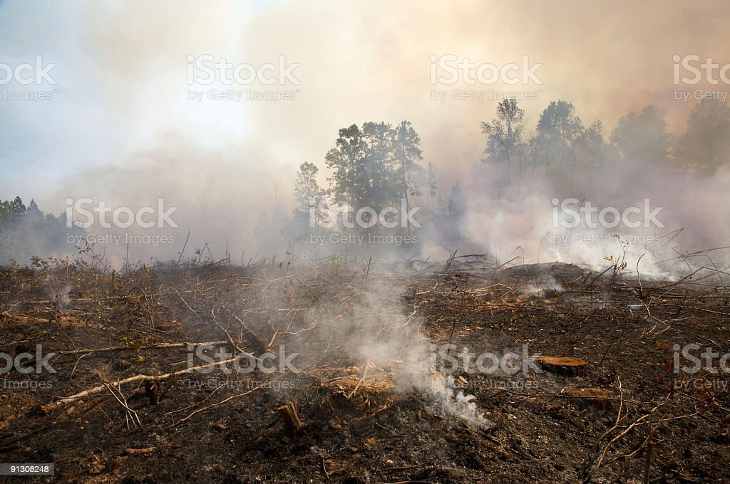 Charred landscape from a prescribed fire burning stock photo