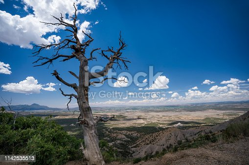 Dead tree, Park Point hiking trail, Mesa Verde National Park, Colorado, USA