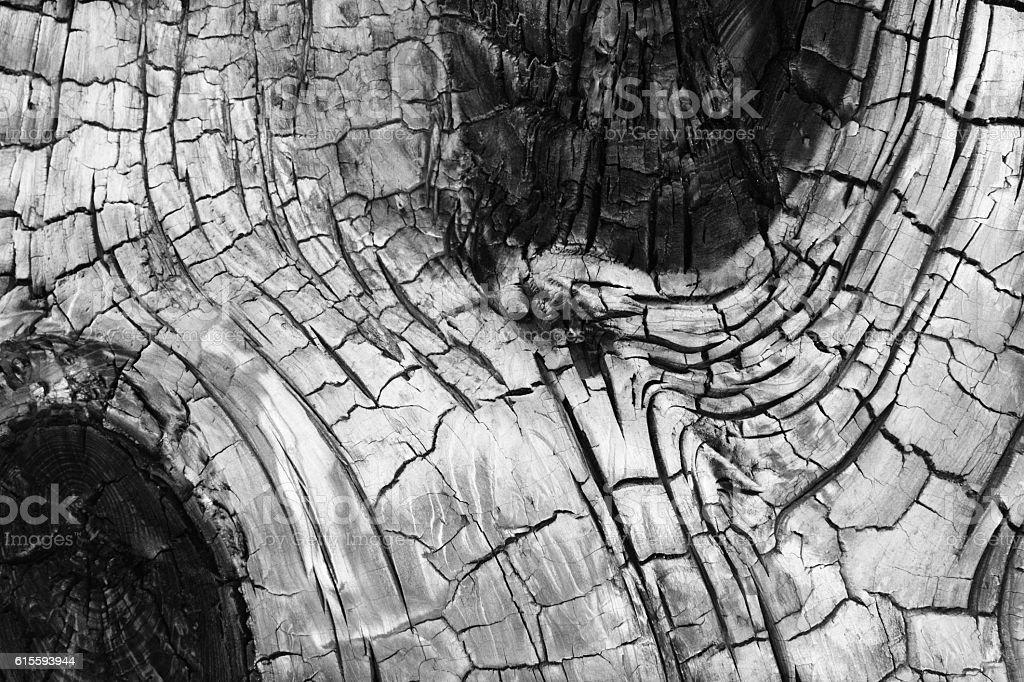 Charred Tree Bark Phloem Knots stock photo