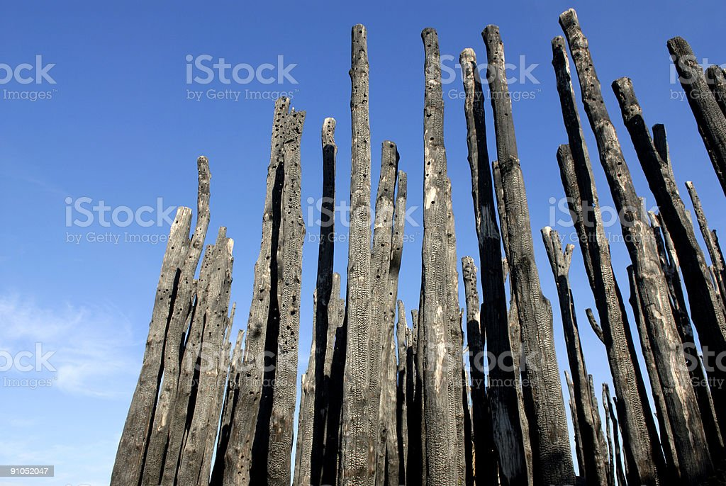 Charred trunks royalty-free stock photo