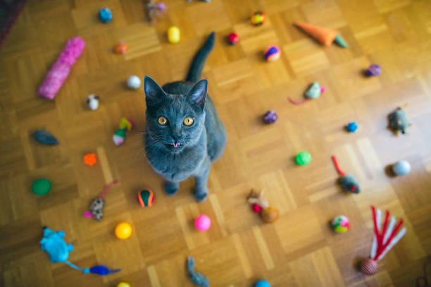 Chartreux cat tongue picture id884732984?b=1&k=6&m=884732984&s=612x612&w=0&h=9utan18vm1y6ue7o6k8obrbd99zxqssg n2 3ifkej4=