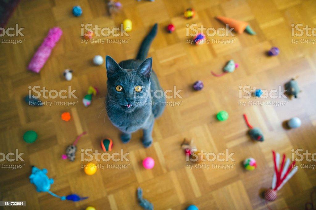Chartreux Katze Zunge – Foto