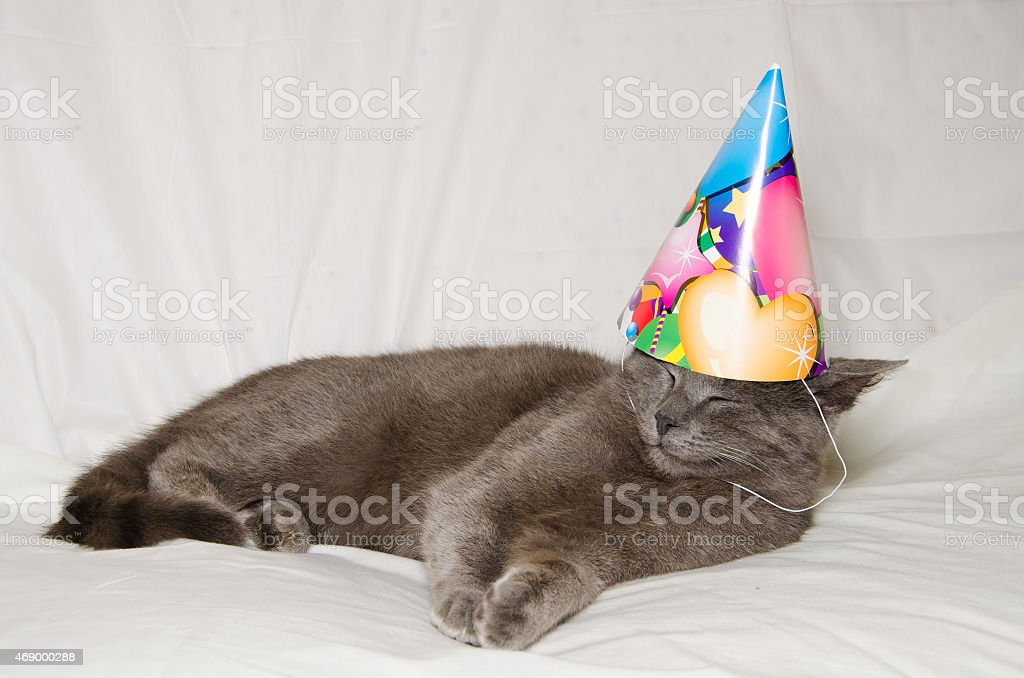 Chartreux Cat Wearing A Party Hat Royalty Free Stock Photo