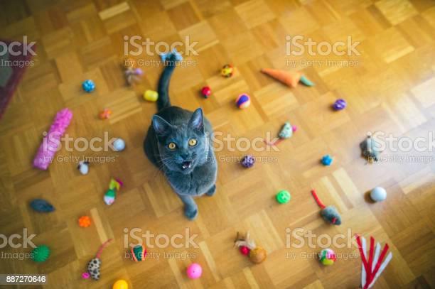 Chartreux cat yelling picture id887270646?b=1&k=6&m=887270646&s=612x612&h=dumebc2chmhbwx4nzaqav0yhmczqea kzvchyirljtc=