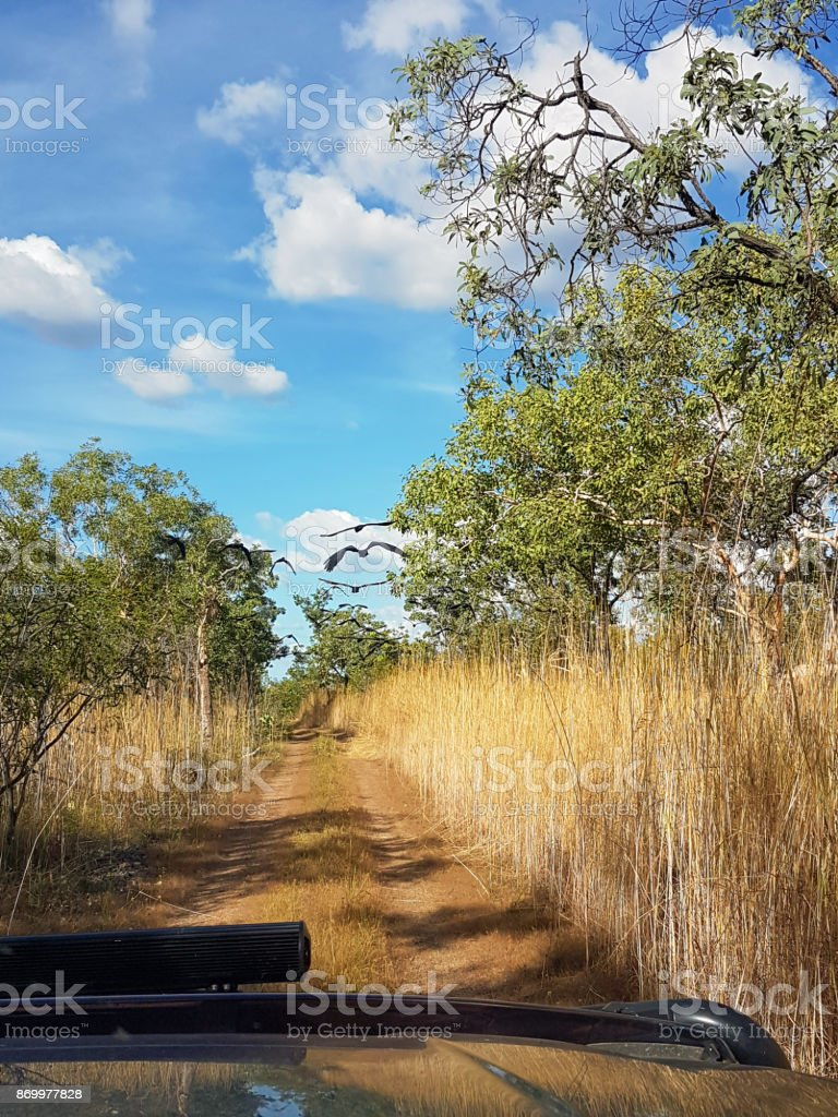 Chasing birds on a 4wd track stock photo