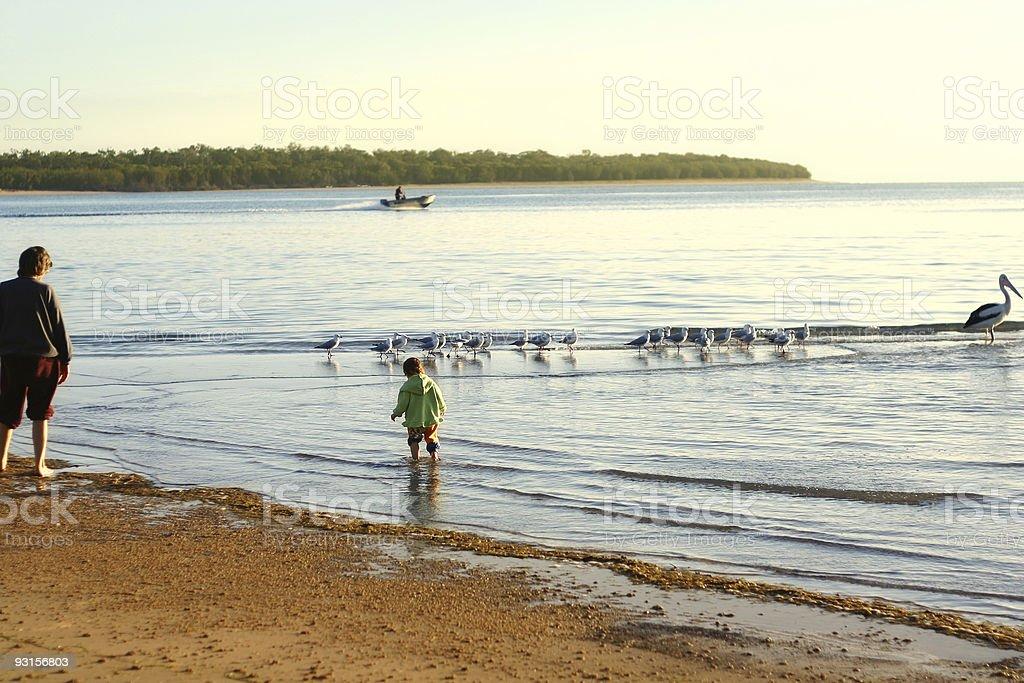 Chasing birds royalty-free stock photo