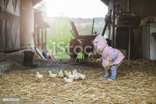 Two years old girl playing on grandfathers farm on Easter . She is happy and playful, running and feeding little chickens. She loves animals and enjoying to pet them