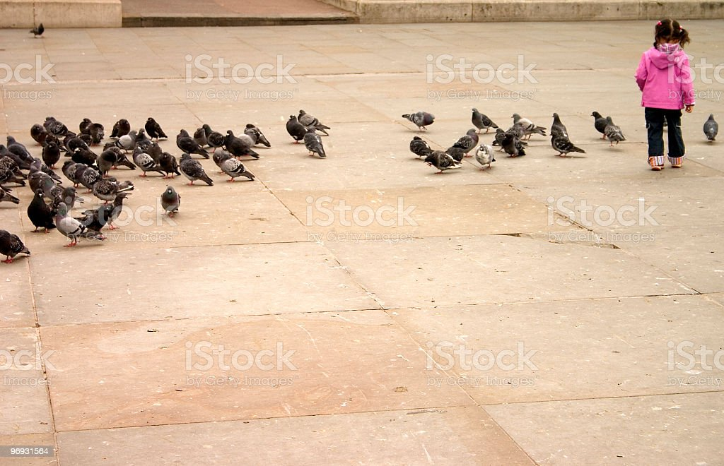 Chasing Pigeons royalty-free stock photo
