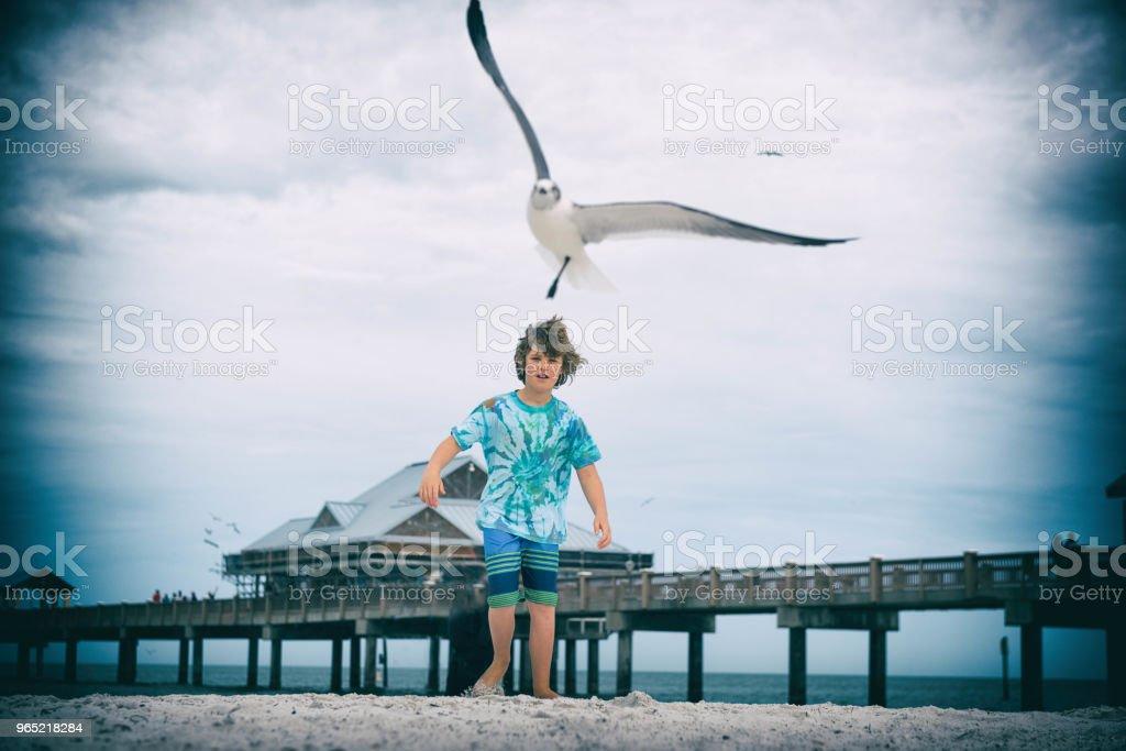 Chasing seagulls at the coast zbiór zdjęć royalty-free
