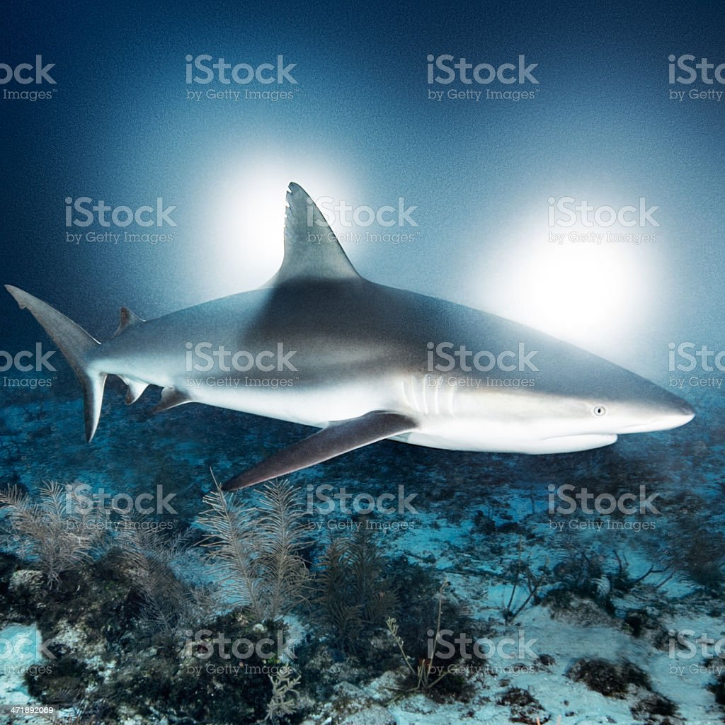 Chasing sharks royalty-free stock photo