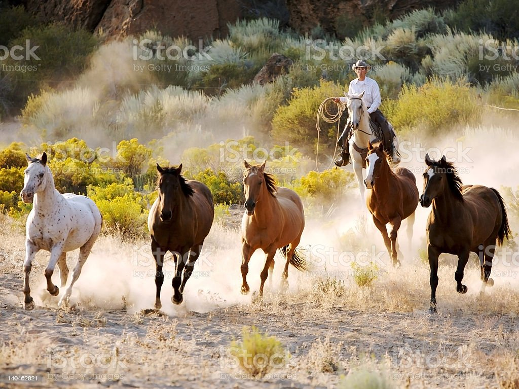 Chasing the Herd royalty-free stock photo