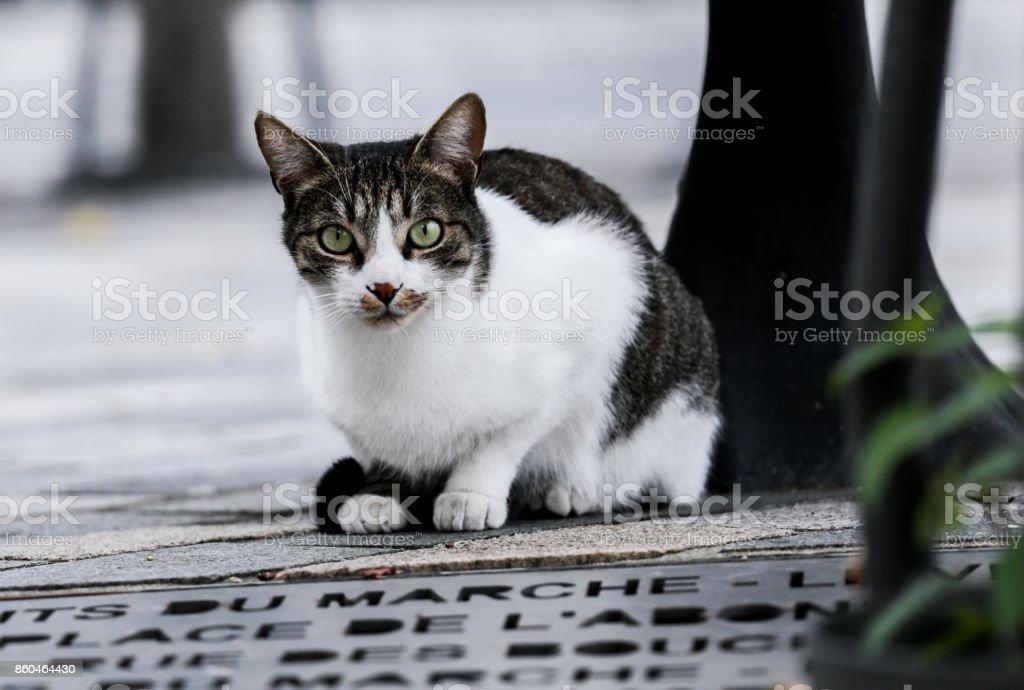 chat couché - Photo