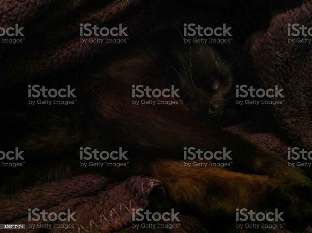 Chat noir stock photo