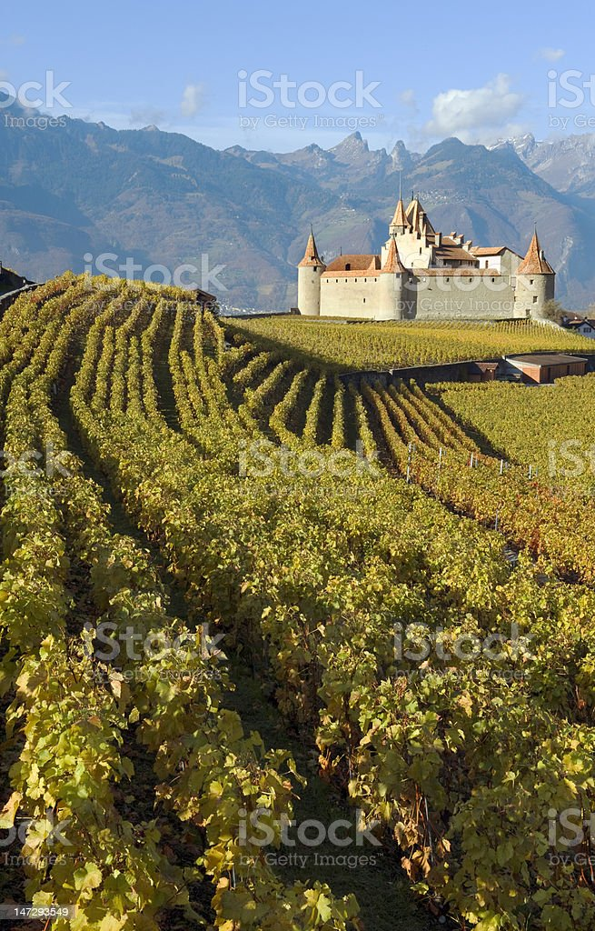 Chateau among grape vines in autumn stock photo