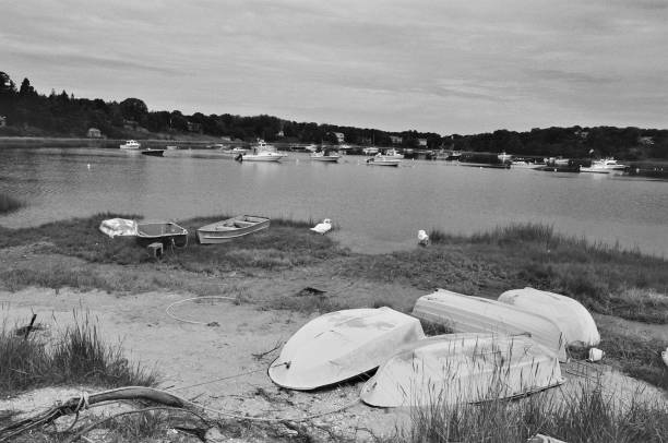 Chatham Harbor Swans, Chatham, MA. stock photo