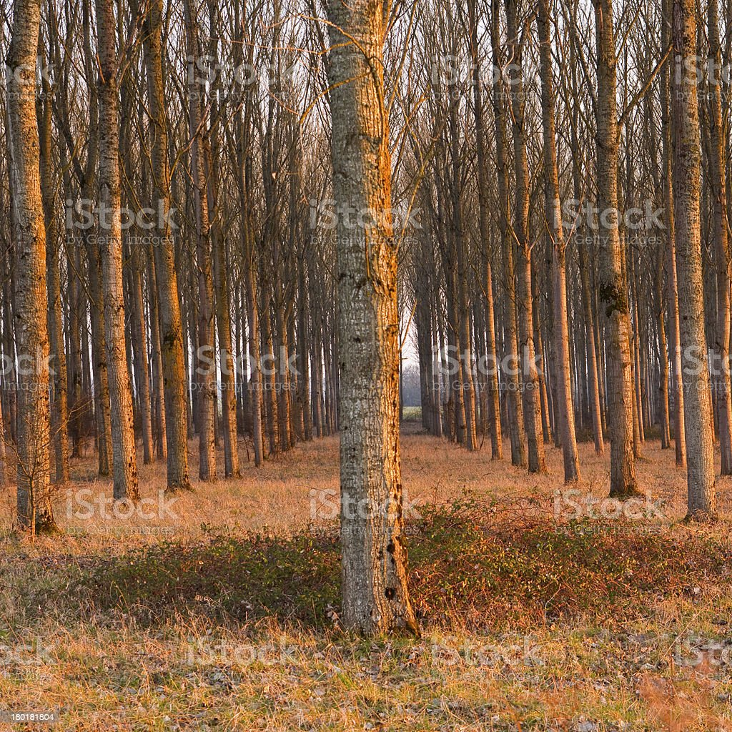 Chaumont trees royalty-free stock photo