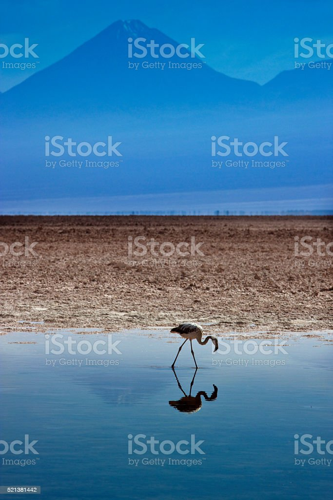 Chaxa Lagoon - Atacama Salt Flats - Chile stock photo