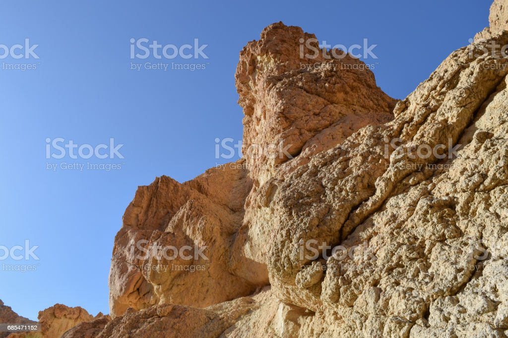 Chebika oasis in the mountains of Tunisia. Flora of North Africa foto de stock royalty-free