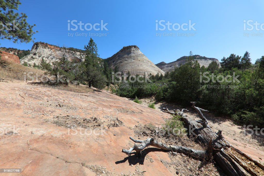 Checkerboard Mesa in Zion National Park. Utah. USA stock photo