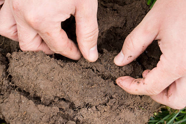 Checking soil health and structure stock photo