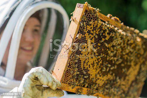 Smiling young female beekeeper holding up a honey super to check the progress the bees are making in beehive, in an apiary on a warm summer day.