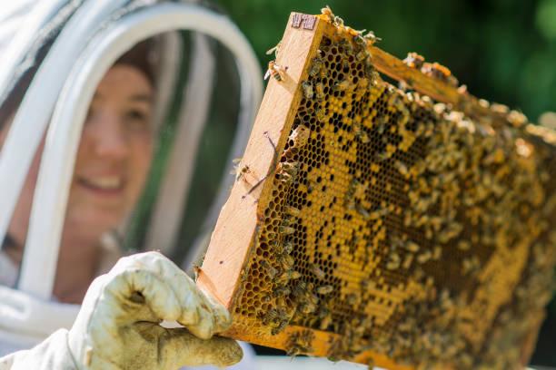 Checking the Beehive's Progress stock photo