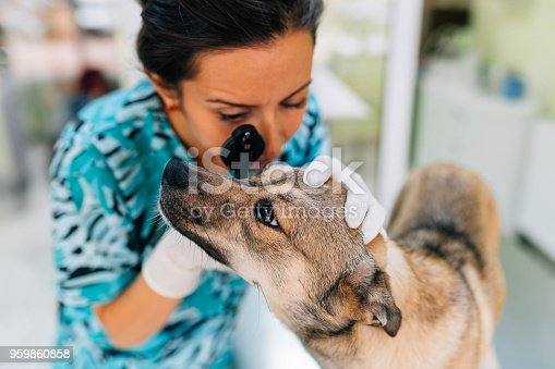 The veterinarian is checking the dog's eyes using medical equipment.