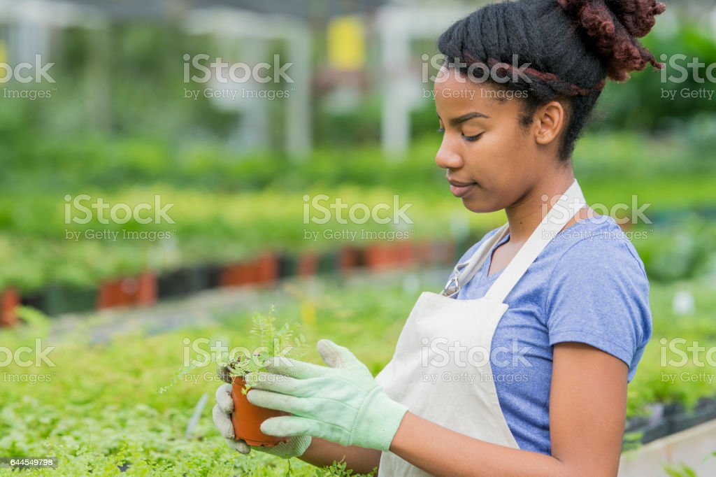 Checking the Plants stock photo