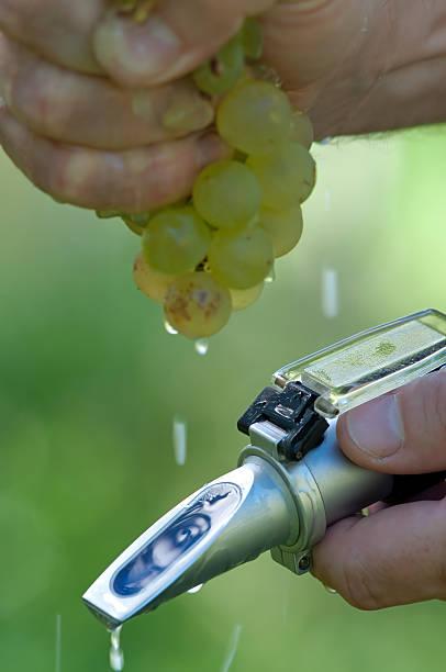 überprüfung der sugar wettbewerb-traube - grape sugar stock-fotos und bilder