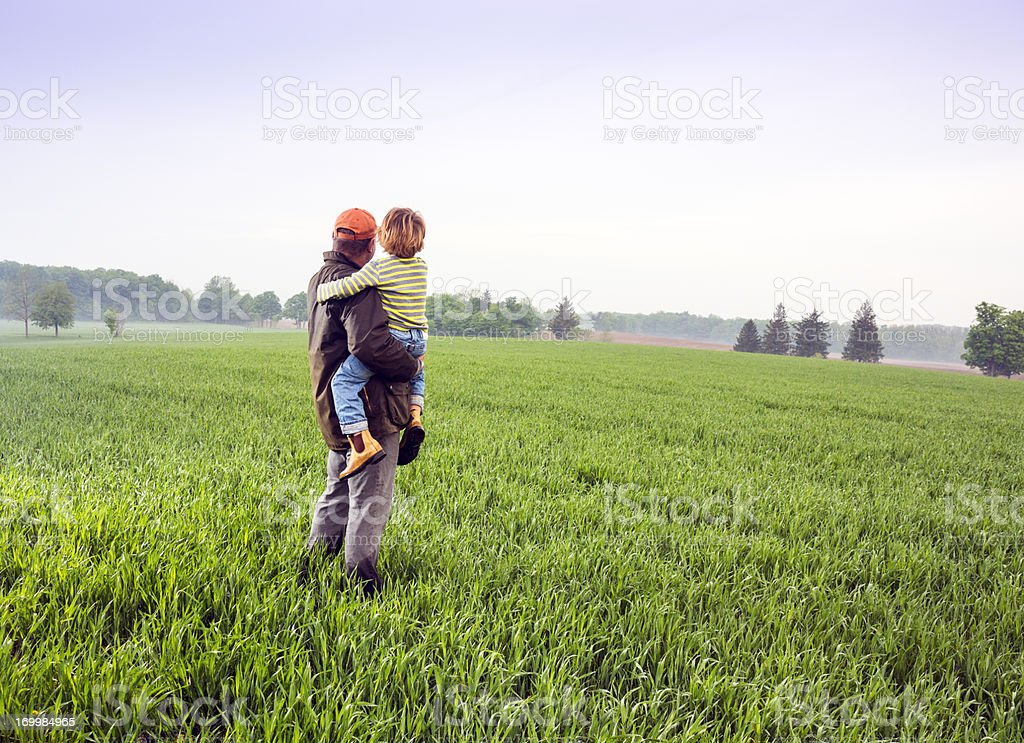 Checking the wheat fields stock photo