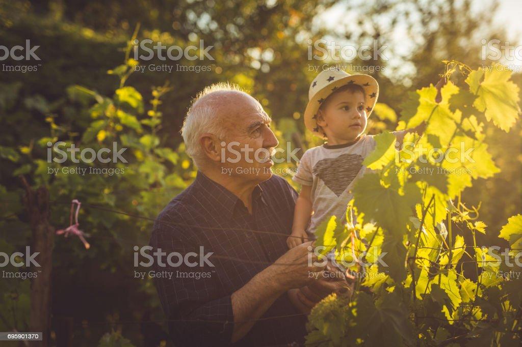 Checking up the vineyard stock photo
