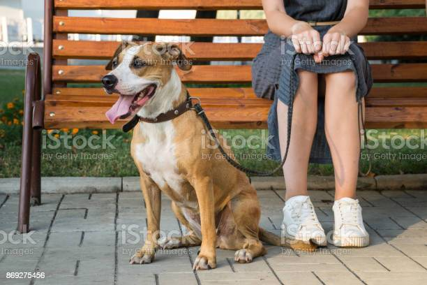 Cheerful and kind dog sits next to her owner at park in the city picture id869275456?b=1&k=6&m=869275456&s=612x612&h=fyipx3imi0lr2sljhzu4rrid5xb01kewduxdk2pblso=